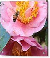 Southern Bee Acrylic Print
