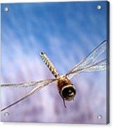 Southern Hawker Dragonfly  Acrylic Print