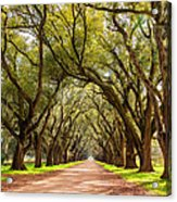 Southern Journey Paint Acrylic Print
