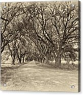 Southern Journey Sepia Acrylic Print