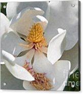 Southern Magnolia Blossom Acrylic Print