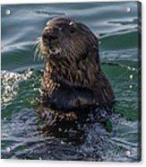 Southern Sea Otter 2 Acrylic Print