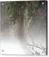 Southern Trees Have Curves Acrylic Print
