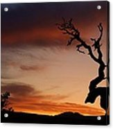 Southwest Tree Sunset Acrylic Print by Michael J Bauer