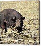 Sow In The Field Acrylic Print