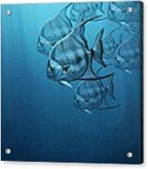 Spade Fish Acrylic Print