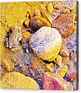Spadefoot Toad Near Stones On Capitol Gorge Pioneer Trail In Capitol Reef National Park-utah Acrylic Print