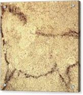 Spain. Kortezubi. Horse 13000 Bf. Upper Acrylic Print