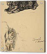 Spaniel And Chow, 1930, Illustrations Acrylic Print