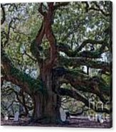 Spanish Moss Draped Limbs Acrylic Print