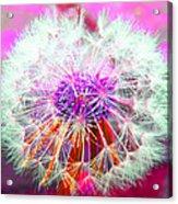 Sparkle Acrylic Print