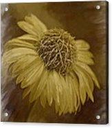 Sparkling Daisy Acrylic Print