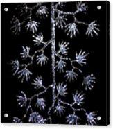 Sparkling Diamond Snowflakes Acrylic Print