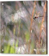 Sparkling Morning Sunshine With Dragonfly Acrylic Print
