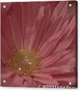 Sparkling Pink Acrylic Print