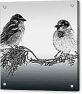 Sparrow Digital Art Acrylic Print