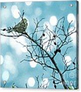 Sparrow In A Branch Acrylic Print