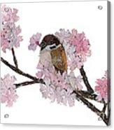 Sparrow Art  Acrylic Print