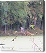 Sparrow On Arc Acrylic Print