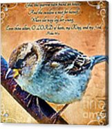 Sparrow With Verse And Painted Effect Acrylic Print