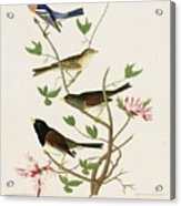 Sparrows And Bunting Acrylic Print