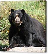 Speckled Bear Acrylic Print