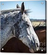 Speckled Gray Acrylic Print