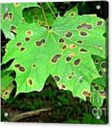 Speckled Leaves Acrylic Print