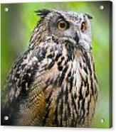 Spectacled Owl  Acrylic Print