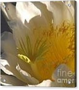 Spectacular Dragon Fruit Bloom Acrylic Print