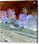 Spectral Wilderness And Copper Sky Acrylic Print