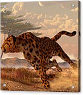 Speeding Cheetah Acrylic Print by Daniel Eskridge