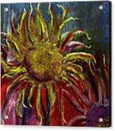 Spent Sunflower Acrylic Print