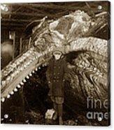 Sperm Whale Taken At Moss Landing California  On January 22 1919 Acrylic Print