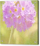 Sphere Florale - 01tt01a Acrylic Print by Variance Collections