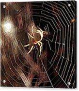 Spider - Building A Ferris Wheel Acrylic Print