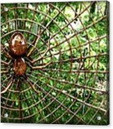 Spider In Its Web Acrylic Print
