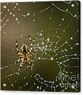 Spider In Web 5 Acrylic Print