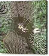 Spider Light Acrylic Print