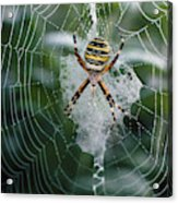Spider On Its Web Acrylic Print