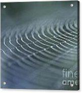 Spider Web With Dew Acrylic Print