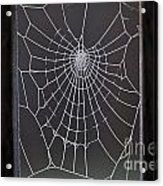 Spider Web With Frost Acrylic Print