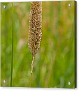 Spider's Grass Staircase Acrylic Print