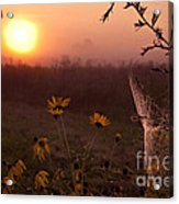 Spiderweb And Wildflowers Lit By Morning Sunrise Acrylic Print
