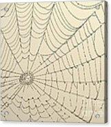 Spiderweb At Dawn Acrylic Print