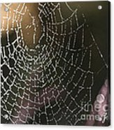Spiderweb Green Acrylic Print by Artist and Photographer Laura Wrede