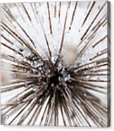 Spikes And Ice Acrylic Print