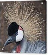 Spikey Feathers-closeup Acrylic Print