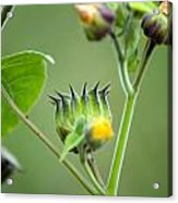 Spiky Green Wild Flowers Acrylic Print