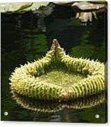 Spiky Lily Pad Acrylic Print